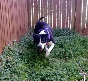 Miriah Hetherington's dog Teddy