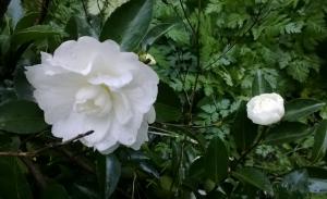 flower_1Nov15